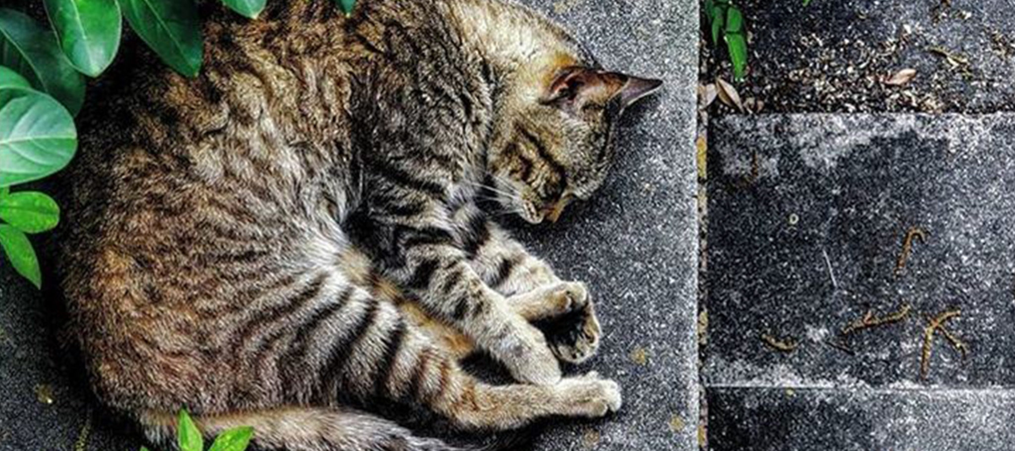 The Love and Care of Feral Creatures